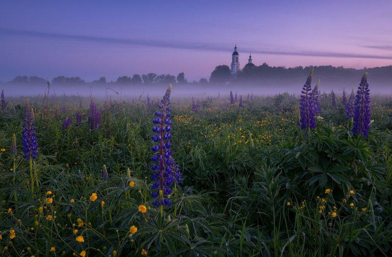 утро, рассвет, природа, туман, филипповское Люпиновое утроphoto preview