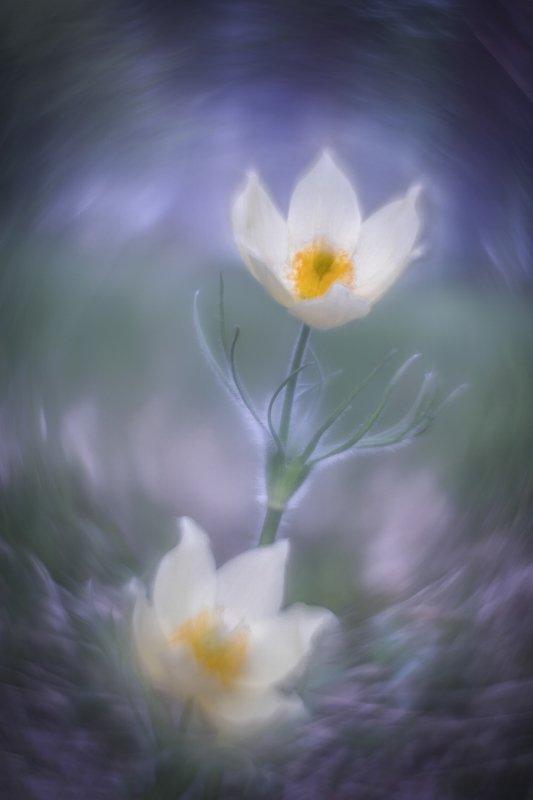 Прощай весна фото превью