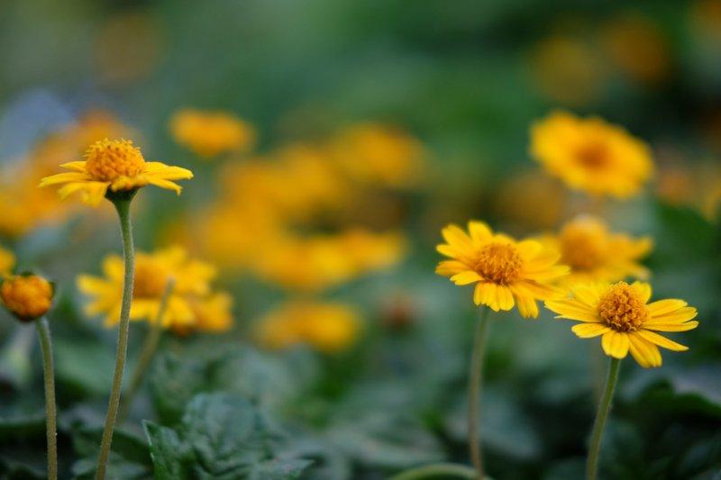 yellow/greenphoto preview