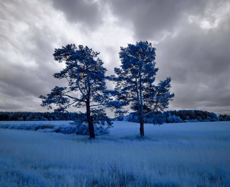 infrared,ик-фото,инфракрасное фото, инфракрасная фотография, пейзаж, лето Стояли две сосны.photo preview