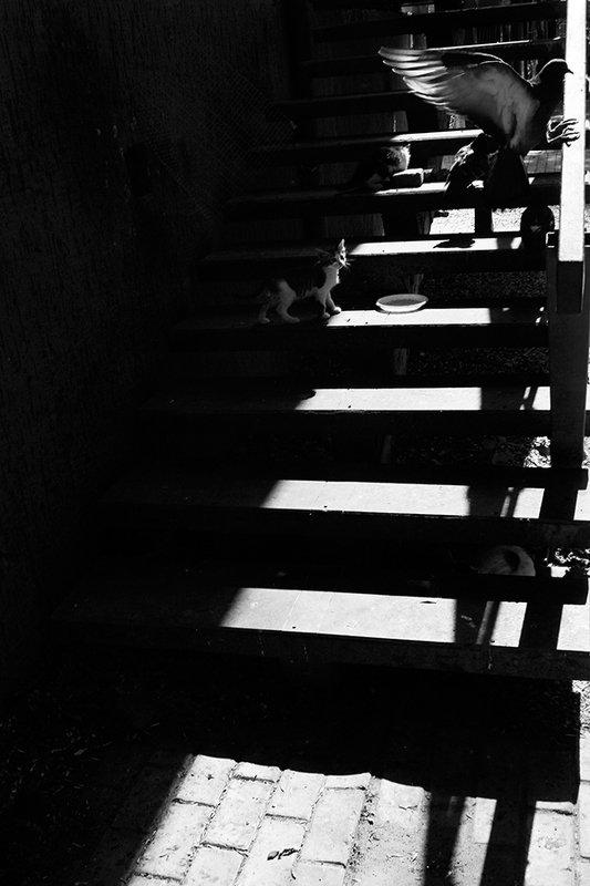 жанр, стрит, street, genre, estet mf, saratov, саратов, documentary, репортаж, тени, shadows, котёнок, голубь *photo preview
