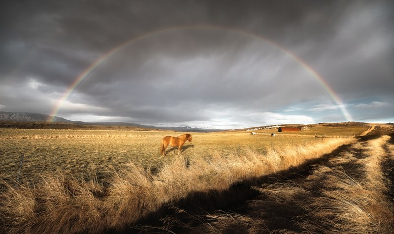 iceland A Horse Under the Rainbowphoto preview