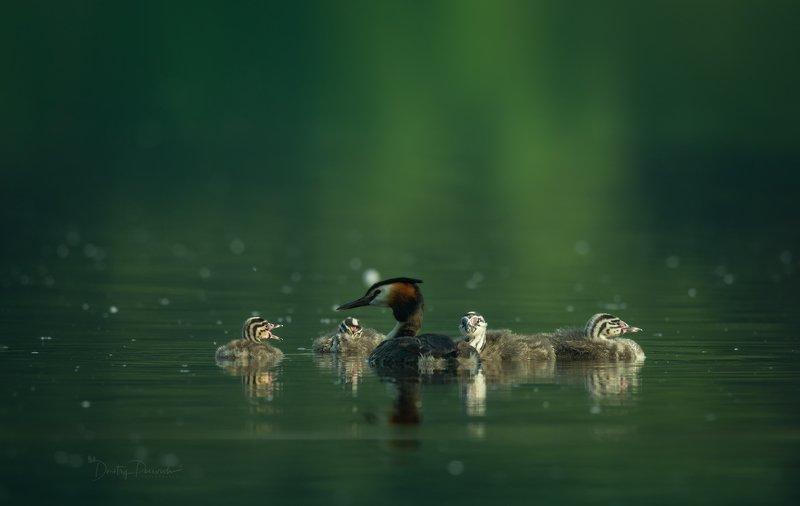 природа, лес, животные, птицы ... дошколята с воспитателем :) фото превью