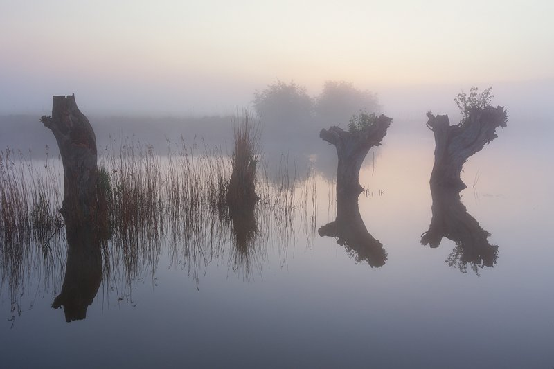 Willows фото превью