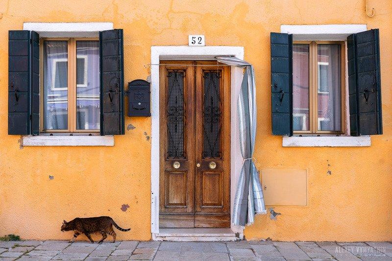 italy, burano, cat, window, door, building, urban, италия, бурано, дом, желтый, окно. двери ***photo preview