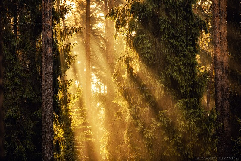 forest, poland, polish, landscape, sunrise, sunset, mood, beautiful, amazing, awesome, adventure, explore, travel, light, trees Air factoryphoto preview