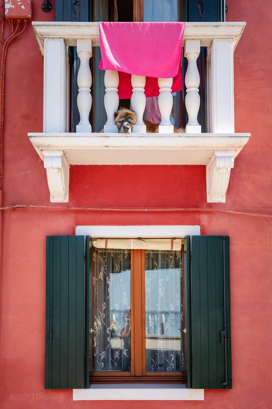 italy, burano, dog, window,  building, urban, италия, бурано, дом, желтый, окно. балкон ***photo preview