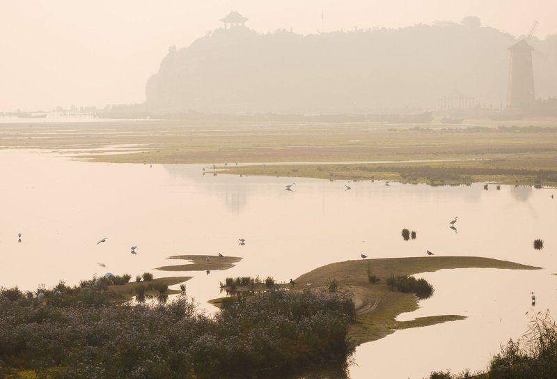 природа китая,цапли, болото, бэйдахэ китай Цаплецарствоphoto preview