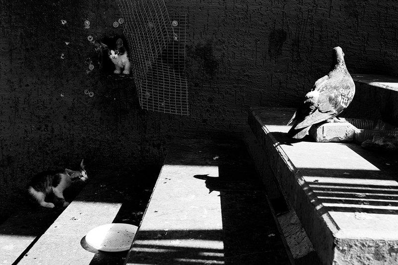 жанр, стрит, street, genre, estet mf, saratov, саратов, documentary, репортаж, тени, shadows, котёнок, голубь ***photo preview