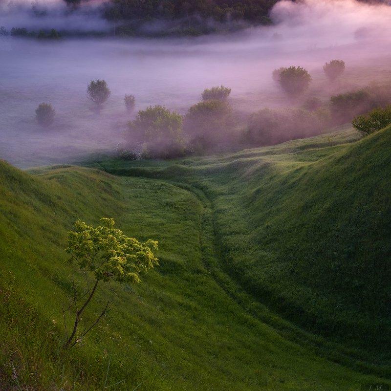 утро, туман, пейзаж, дерево, долина, холмы, morning, foggy, misty, valley, tree, light, fog, hills, landscape, Nature, mist ***photo preview