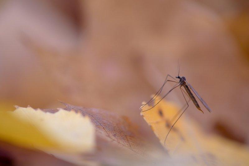 комарикphoto preview