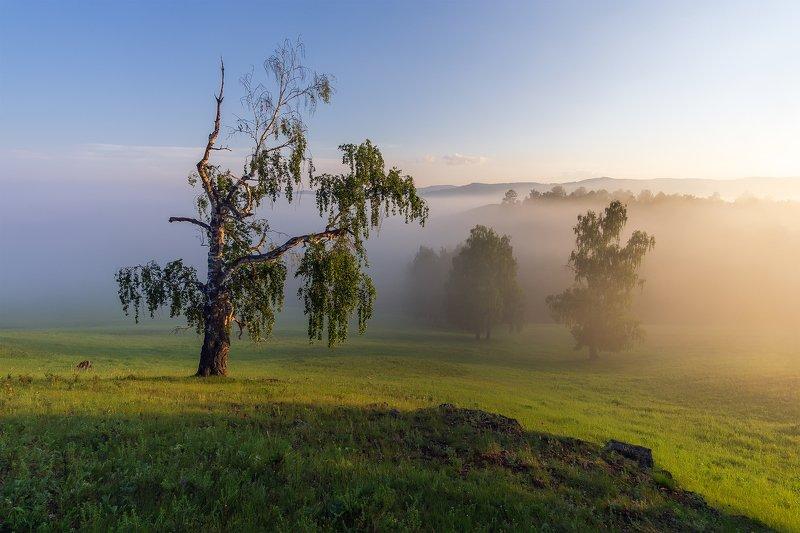 утро, рассвет, восход, туман, лучи Зори Уралаphoto preview