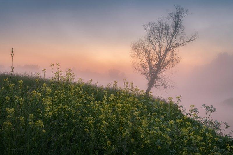 угра,рассвет,утро,пейзаж Туманное утро июня... фото превью