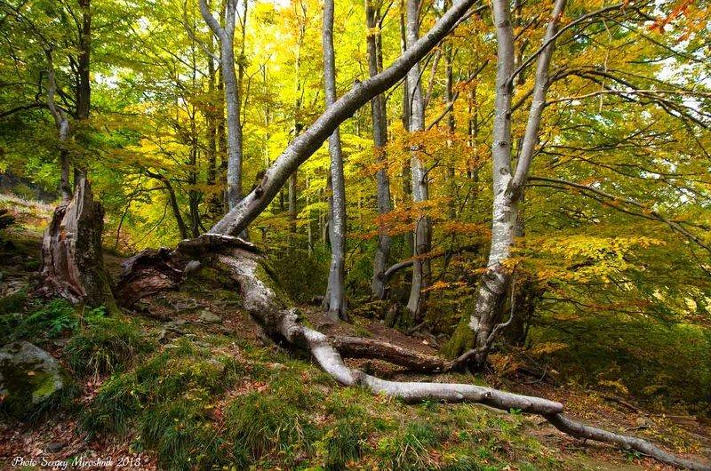 пейзаж, природа, горы, октябрь осень, карпаты, буки, Боржавские букиphoto preview