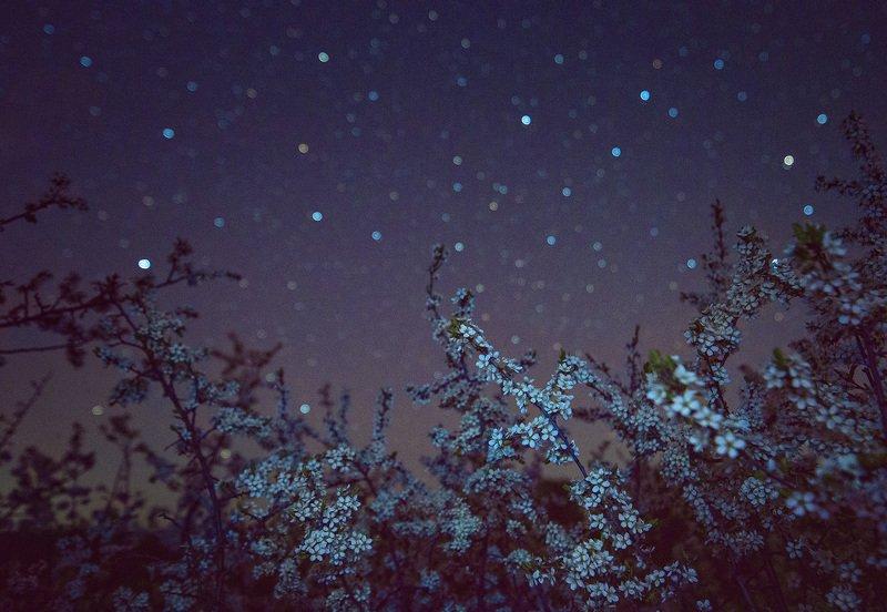 ночь, звезды, терновник, tamron В зарослях терновникаphoto preview