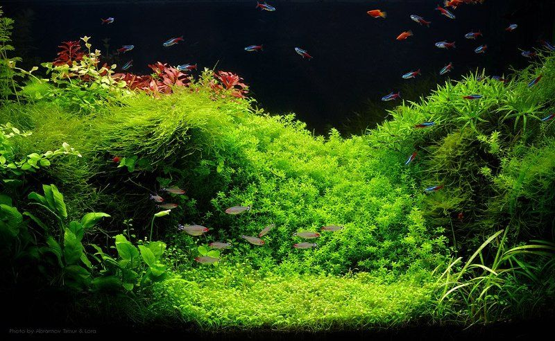 рыбы, аквариум, акваскейп Aquascapephoto preview
