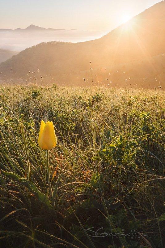 Маркхотский хребет, Краснодарский край, россия, тюльпан, пейзаж, рассвет, закат, цветок,желтый Цвет солнцаphoto preview