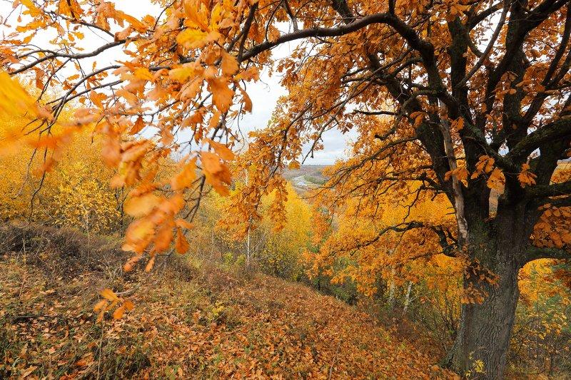 Осень на Хопреphoto preview