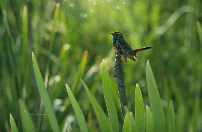 природа, лес, животные, птицы Варáкушкино лето фото превью