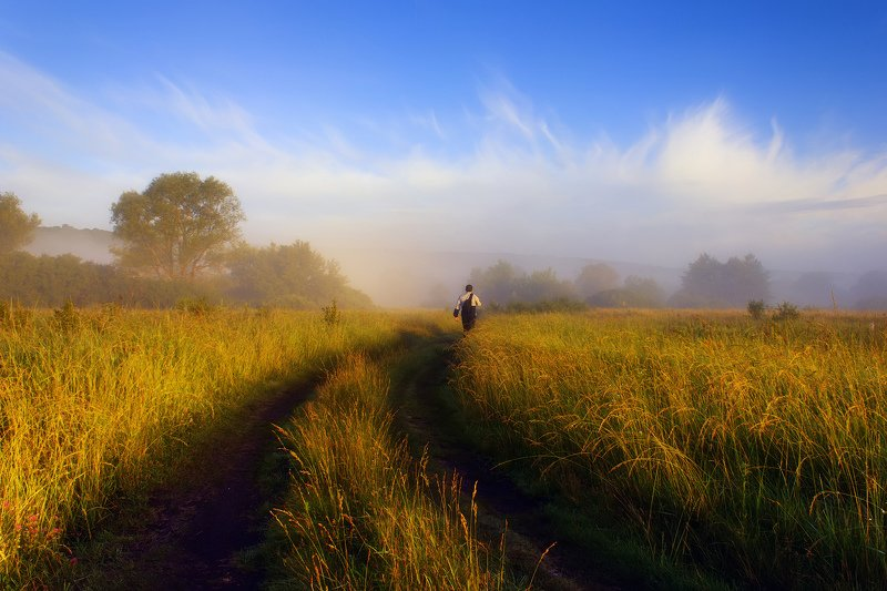 пейзаж, туман, утро, тропа, поле, луг, landscape, fog, morning, trail, field, meadow Дорога к рекеphoto preview