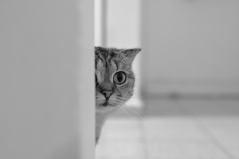hide and seek whith a cat...photo preview