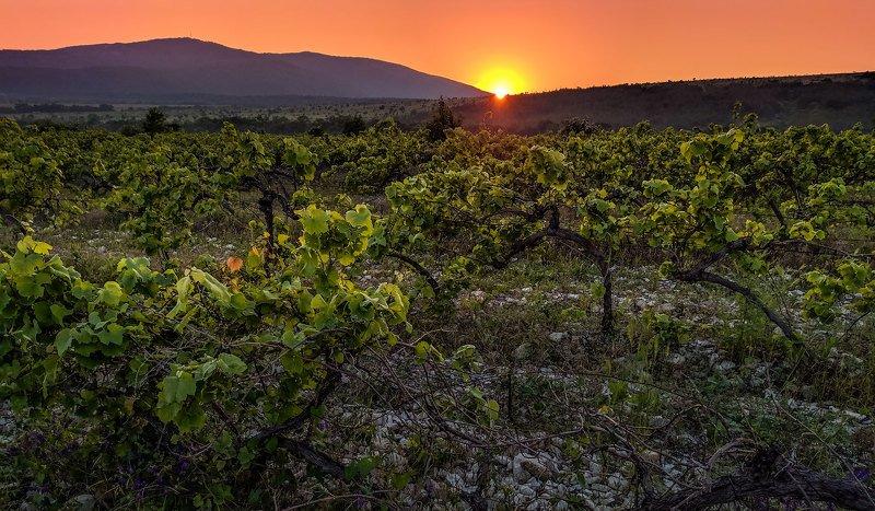 Геленджик. Закат на виноградникахphoto preview