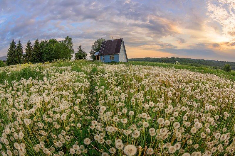 одуванчики деревня лето луг цветы поле дом планета Одуванчиковphoto preview
