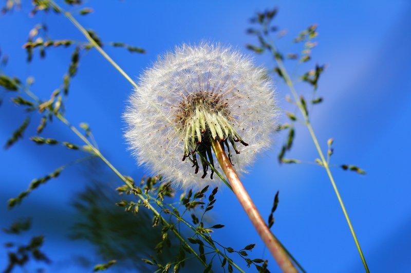 цветок, цветы, полевой, лекарственный, аптечный, соцветие, соцветия, flowers, inflorescence, asteraceae Только небо, только ветер. Только космос впереди...photo preview