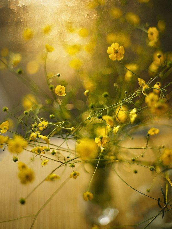 buttercup flowers фото превью