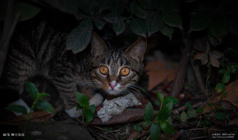 流浪猫photo preview