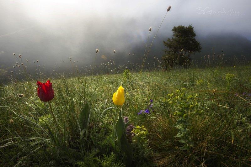 Маркхотский хребет, Краснодарский край, тюльпан Вдохни глубокоphoto preview