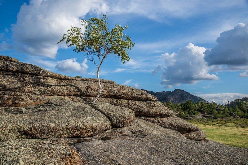 горы Одинокая  берёза.photo preview