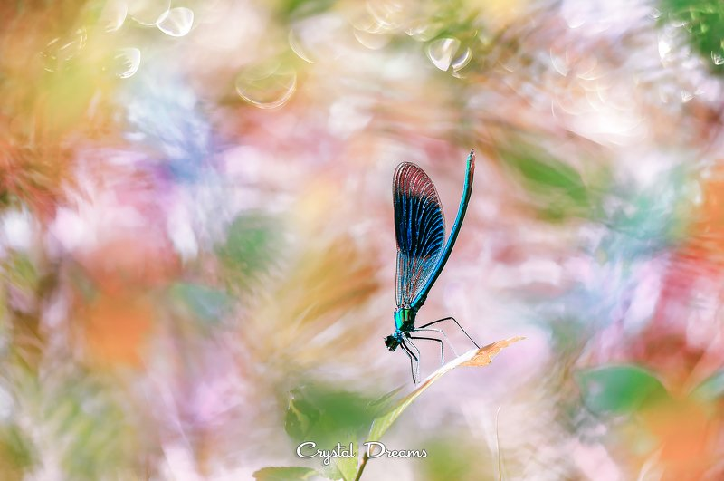 crystal dreams, macro, summer, color, art, nature, dragonfly Powerful summerphoto preview