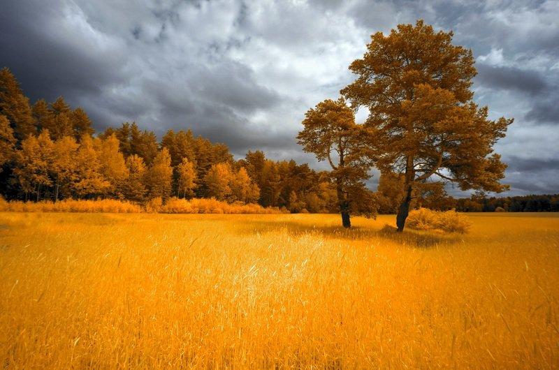 infrared,ик-фото,инфракрасное фото, инфракрасная фотография, пейзаж, лето Немного солнца под пасмурным небом.photo preview