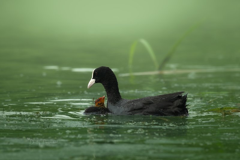 природа, лес, животные, птицы С мамой фото превью