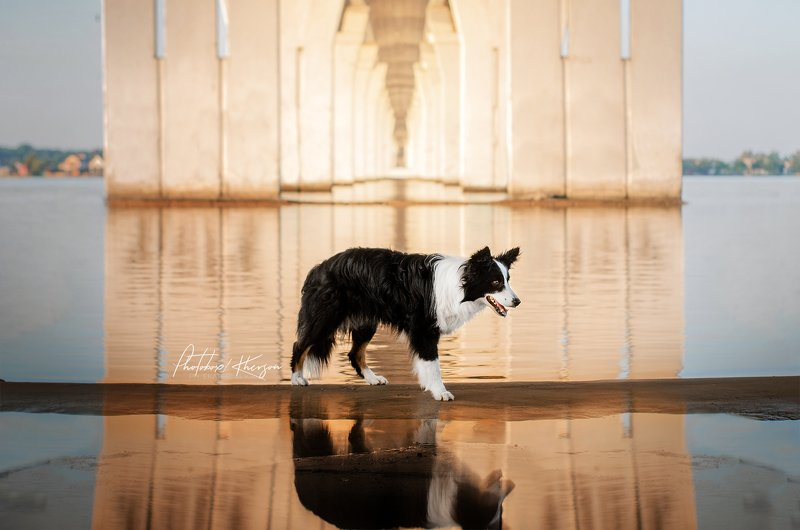 собака, анималистика, лето, рассвет Рассветphoto preview