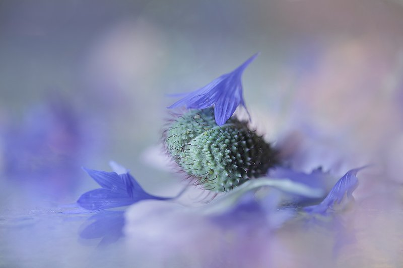 still life,nature,macro,flower ...photo preview