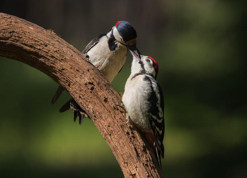 птицы,природа,лето Обед с доставкойphoto preview