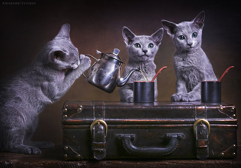 cat Tea Timephoto preview