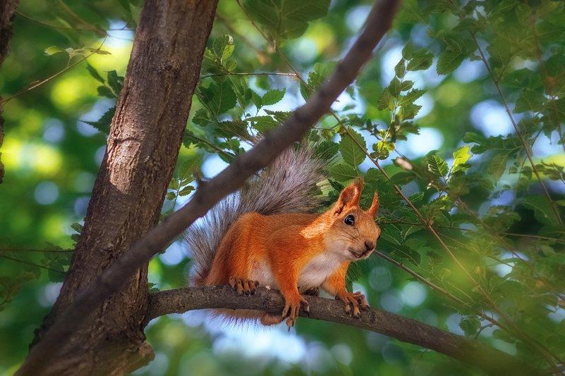 moment, момент, beautiful, красивый,  юпитер-37а, manual lens, мануальная оптика, nature, природа, wildlife, живая,  animal, животное, red, рыжая, squirrel, белка, У меня к тебе серьезный разговор! :)photo preview
