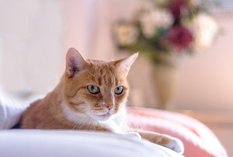 животные,кузя,рыжий,кошки,коты,любимцы,питомцы,цветы,cat, animals, Рыжий кот проснулся рано...photo preview