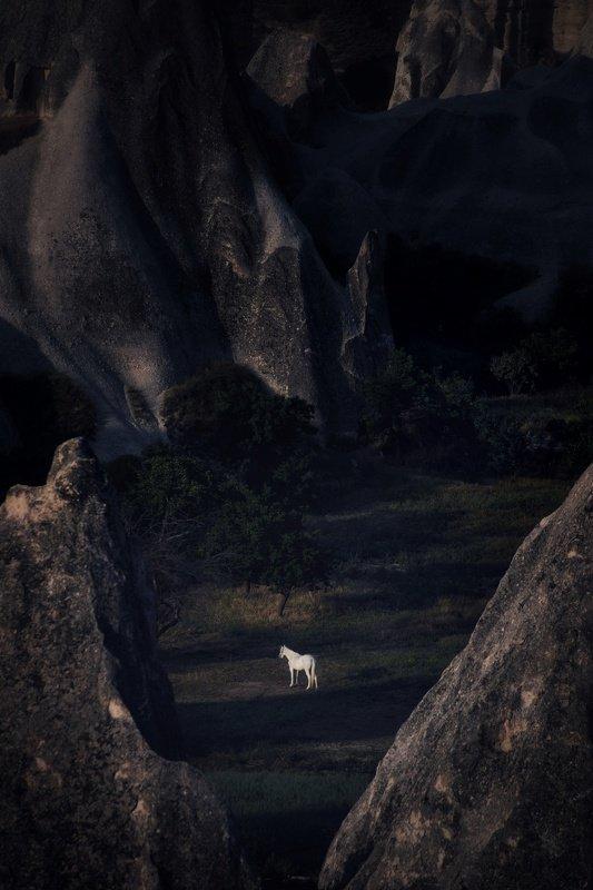 white horse фото превью