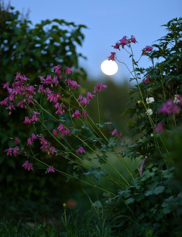 история, одной, лампочки, (луны) История одной \
