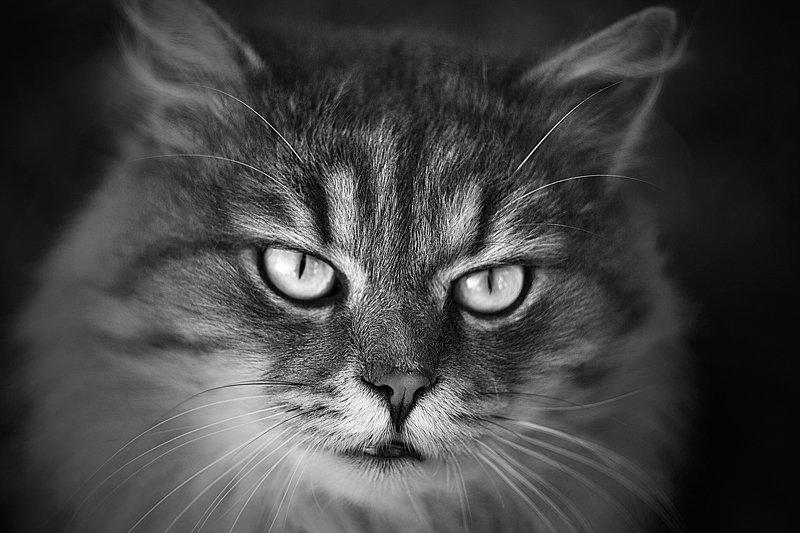 кот, животные, чб, звери, уличные коты photo preview