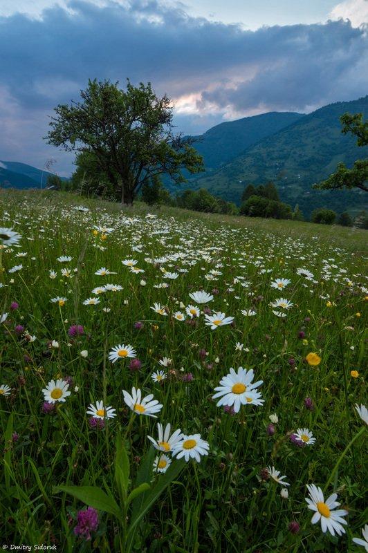 Летние цветыphoto preview