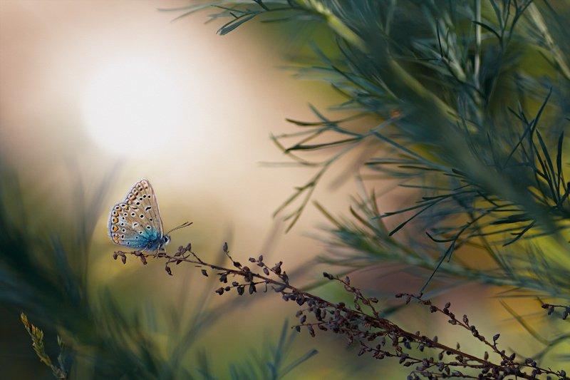 бабочка,лист,трава,солнце,крылья,свет,блик,цветок *** фото превью