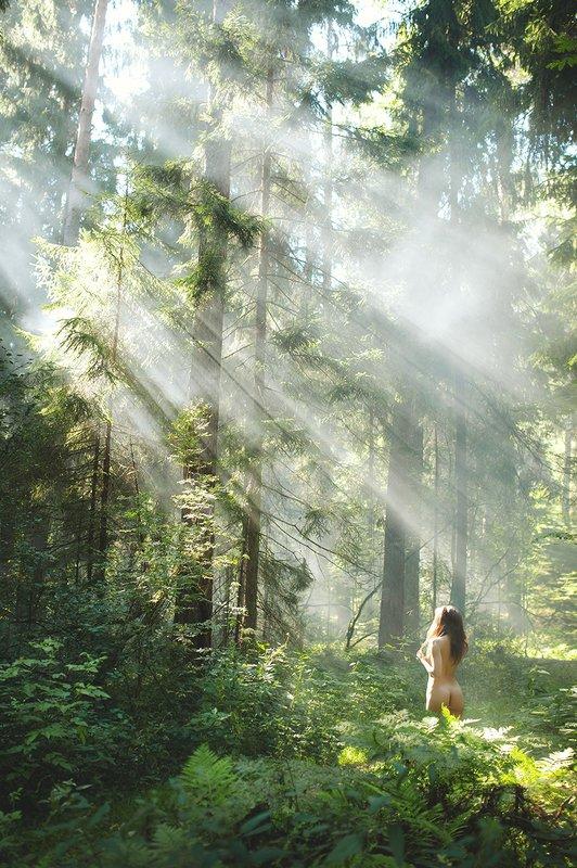 лето, девушка, портрет, свет, лес, папоротник ***photo preview