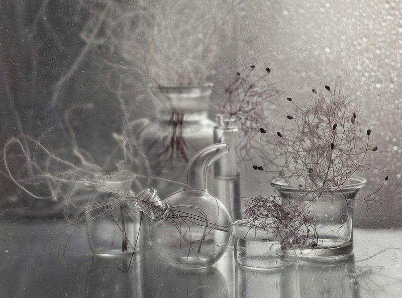 жизнь из стекла*photo preview