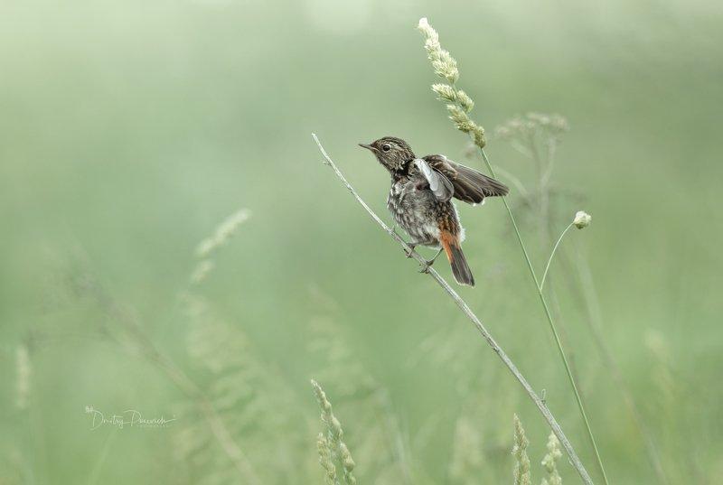 природа, лес, животные, птицы Проба крыла фото превью