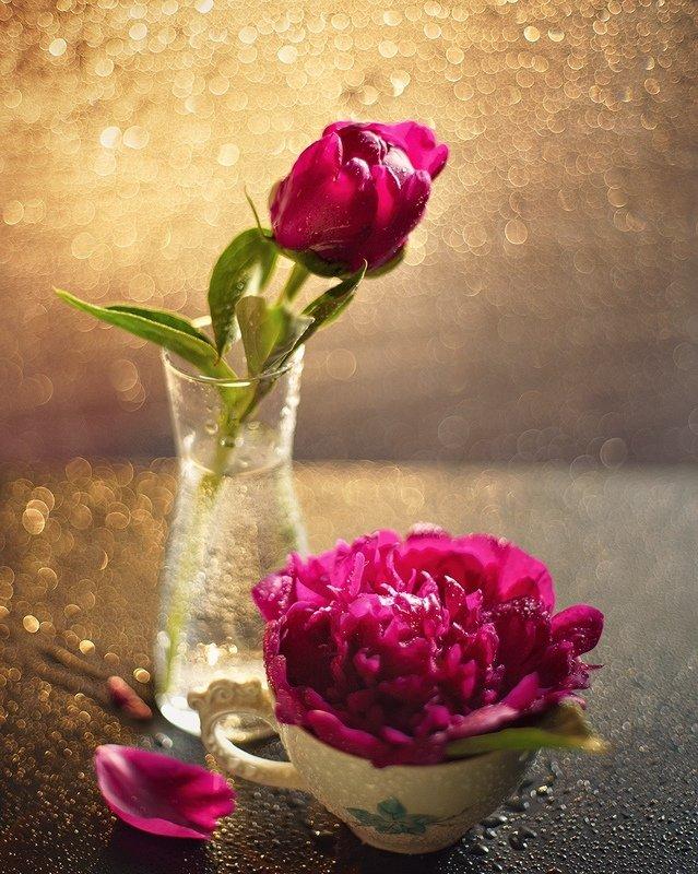 flowers, bokeh peonies фото превью